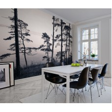 Old Pine Trees R13021